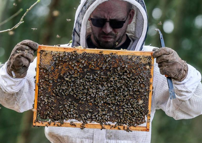 Bijen vallen dieven aan