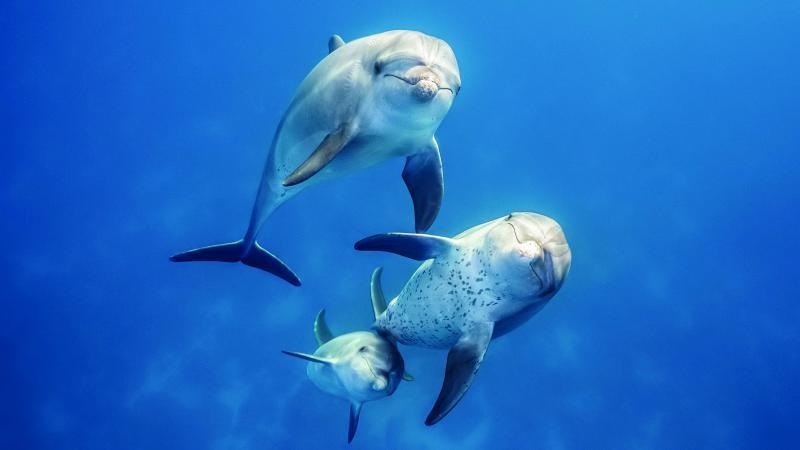 Disneynature's Blue: de Tuimelaardolfijnen stelen de show