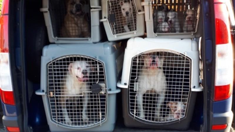 Politie neemt 47 honden in beslag (Foto: Politie.nl)