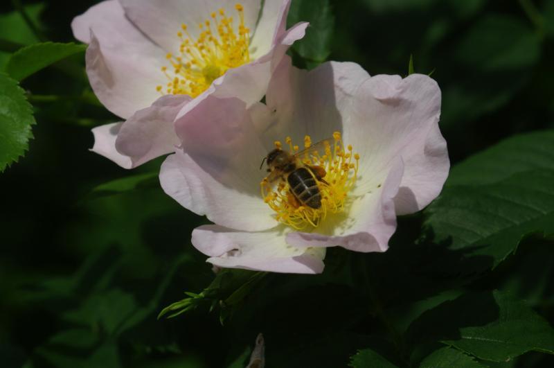 qltel zag bloemen en een bij!  (Foto: qltel)