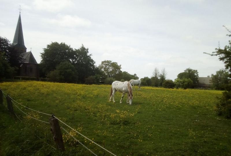 Paarden in de wei (Foto: qltel)