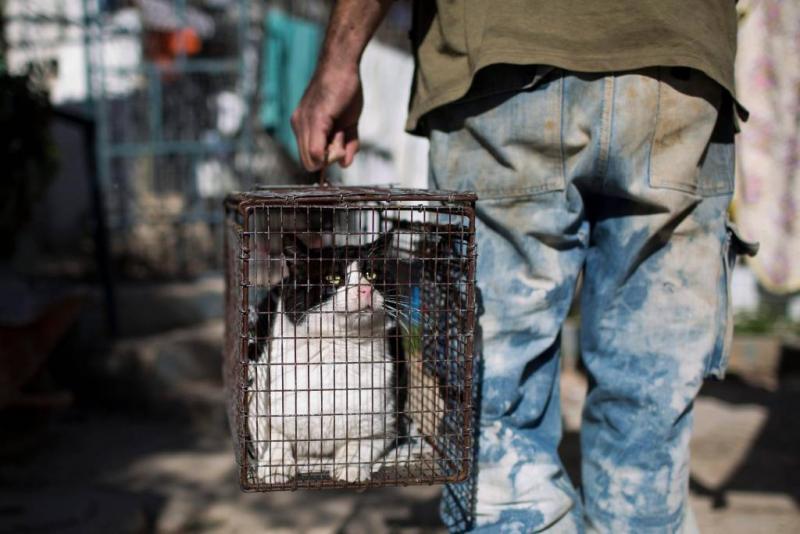 Man bekent verkopen vlees van duizend katten