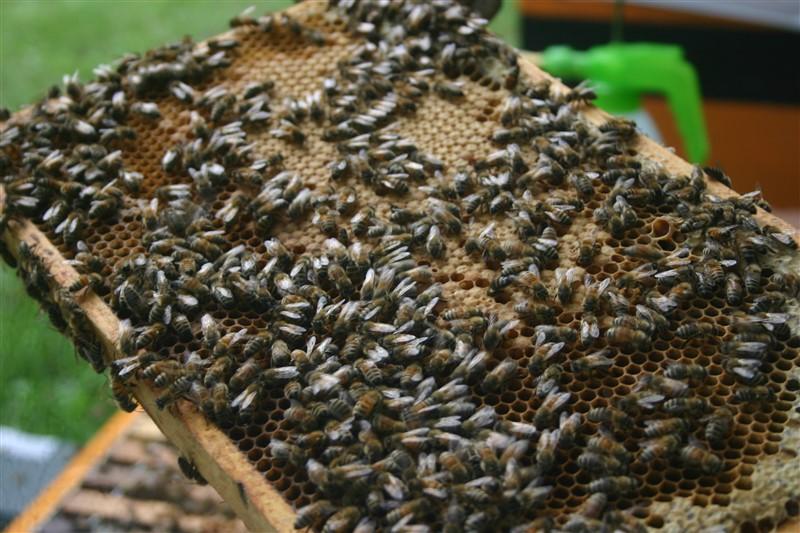 Reclame voor bijen, of bijen voor reclame? (Foto: FOK!)