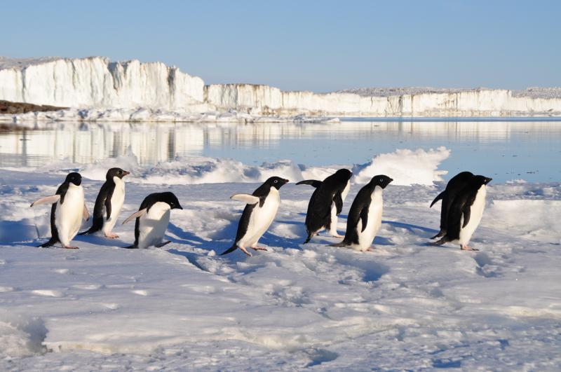Pinguins, altijd leuk!