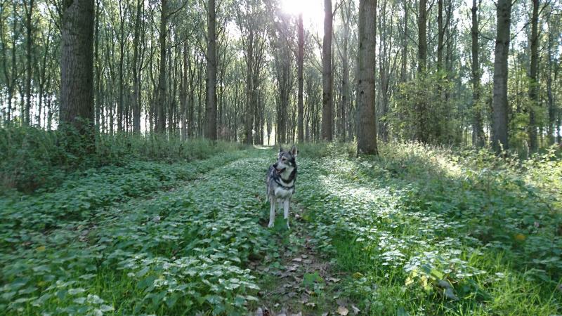 Een bos in Zeeuws Vlaanderen (Foto: Paulus-de-kabouter)
