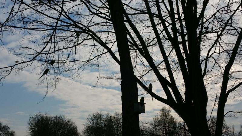 Noorderpark (Foto: Interpretatie)