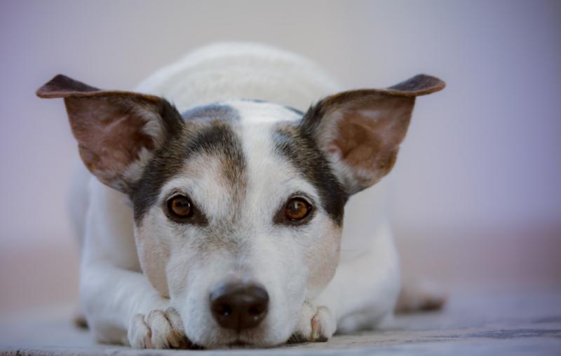 Hond (foto: pxhere)