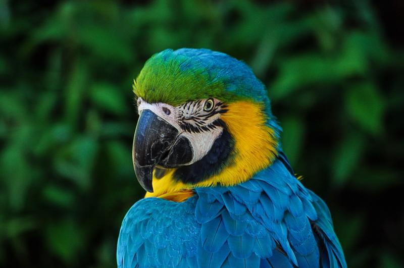 Niet de papegaai uit het bericht (Foto Pxhere)