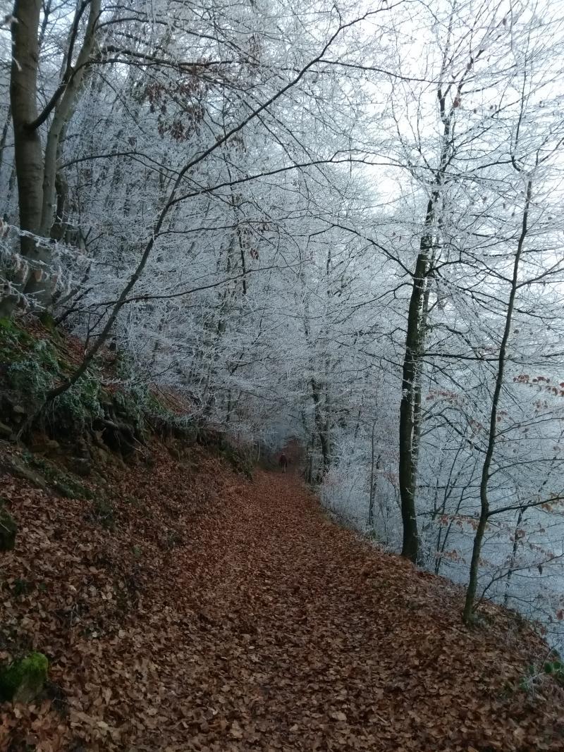 Kroezel was eerst in Spanje, maar nu in Luxemburg, bij een ietwat frisse Mullerthal trail