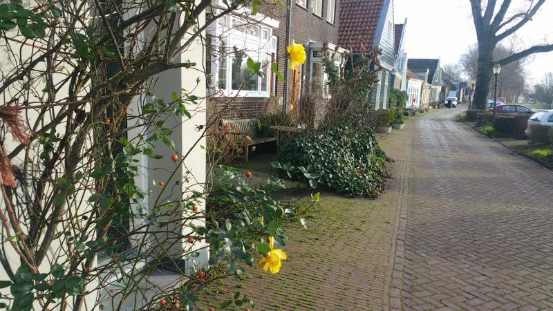 Interpretatie vond een gele roos in vroege bloei (Foto: Interpretatie)