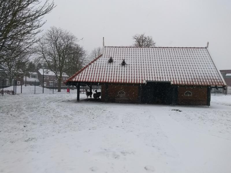 In oost-Brabant was vanmiddag al wat sneeuw gevallen. Genoeg voor de herten om onder hun afdak te blijven. (Foto: Kroezel)