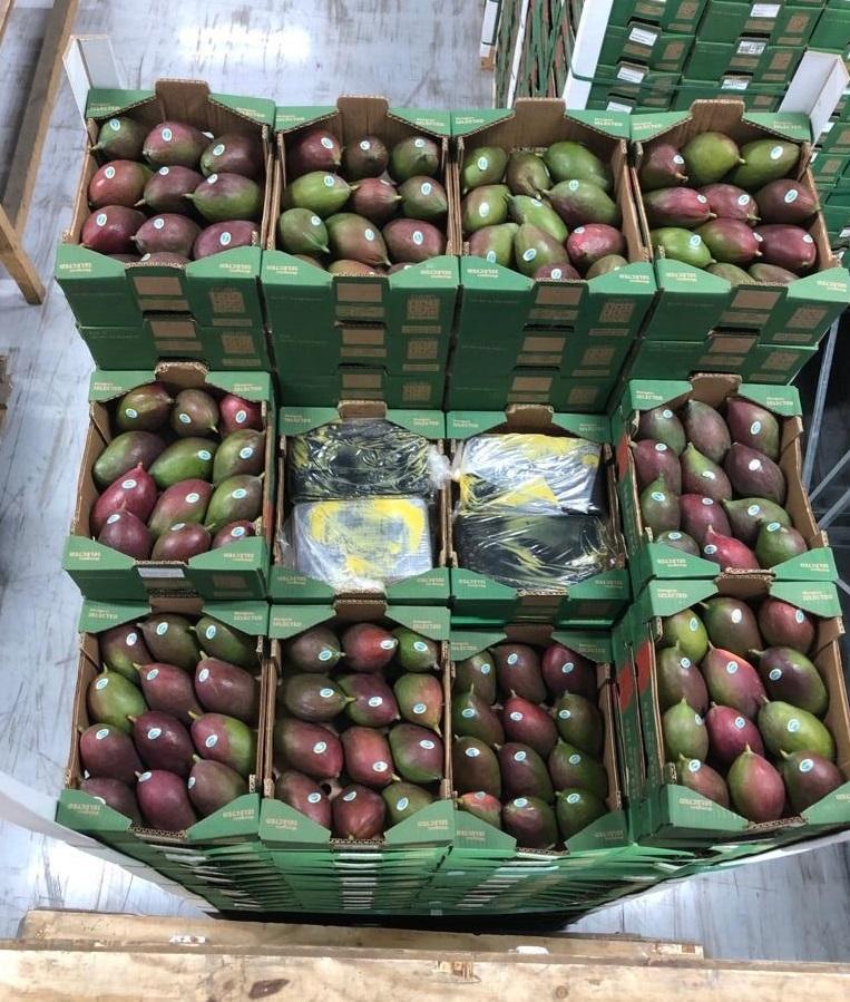 1500 kg coke tussen de mango's; douanier opgepakt (Foto: Openbaar Ministerie)