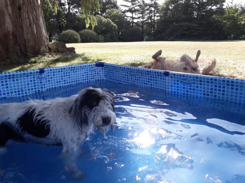 Honden hebben pret in Mar del Plata in Argentinie, bij ruim meer dan 30 graden.  (Foto: Flipsen)