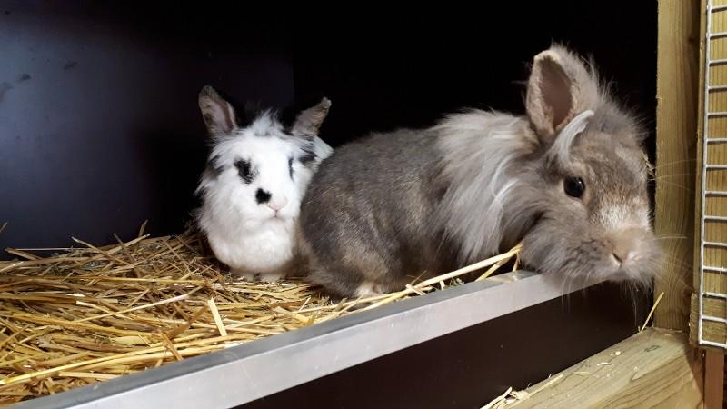 Politie zoekt eigenaar gedumpte konijnen  (Foto: Politie)