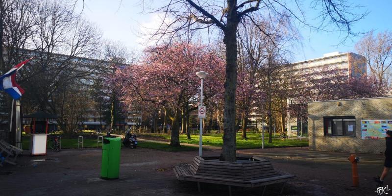 Kleurige taferelen in de Amsterdamse natuur  (Foto: DJMO)