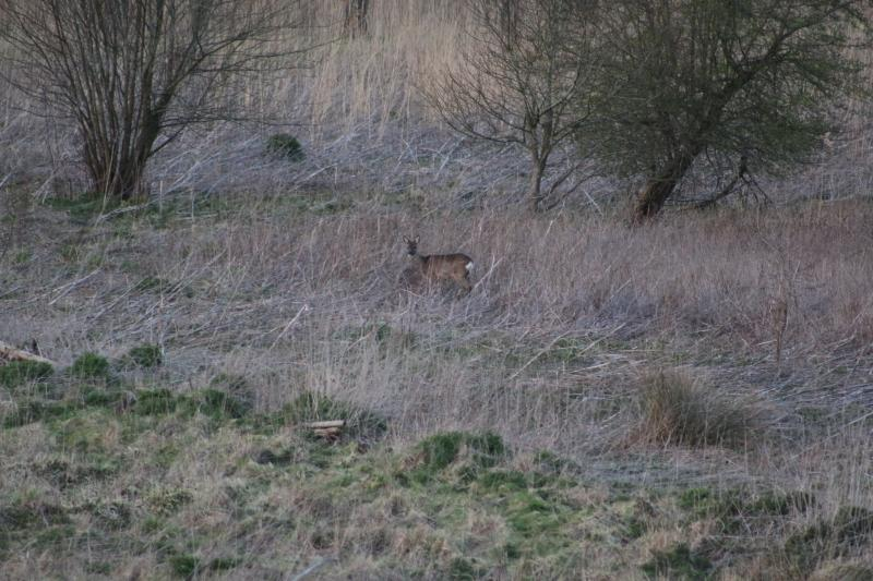 Zelfs in Zeeuws Vlaanderen vind je nog wild (Foto: Paulus-de-kabouter)