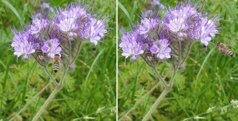 Foto: Stichting Bijen Zonder Zorgen