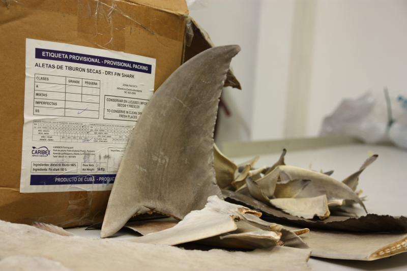 Duizenden haaienvinnen in beslaggenomen op Schiphol (Foto: Rijksdienst voor Ondernemend Nederland)