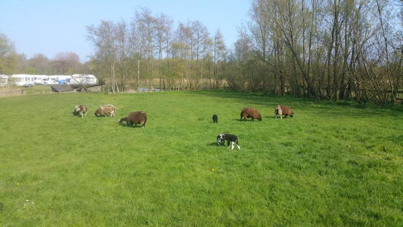 Interpretatie kwam tijdens een van zijn wandelingen een wei met dieren tegen