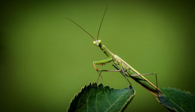 Zomaar een insect, ter illustratie (Foto: Pixabay)
