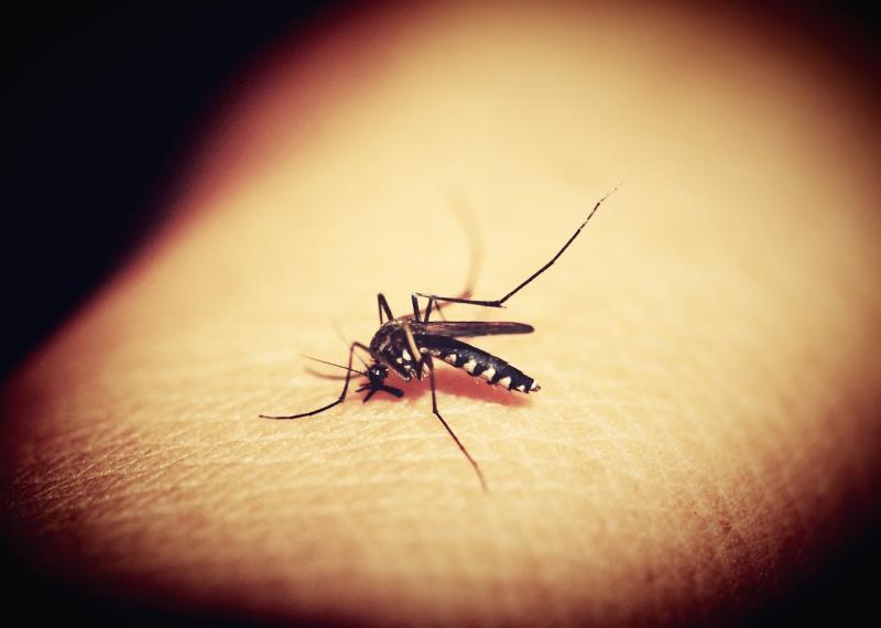 De ziekte wordt overgebracht door muggen (Foto ter illustratie: Pixabay)