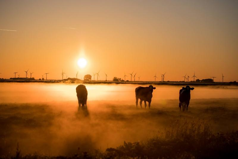 Mistige zonsopkomst (Foto: Klapmongeaul)
