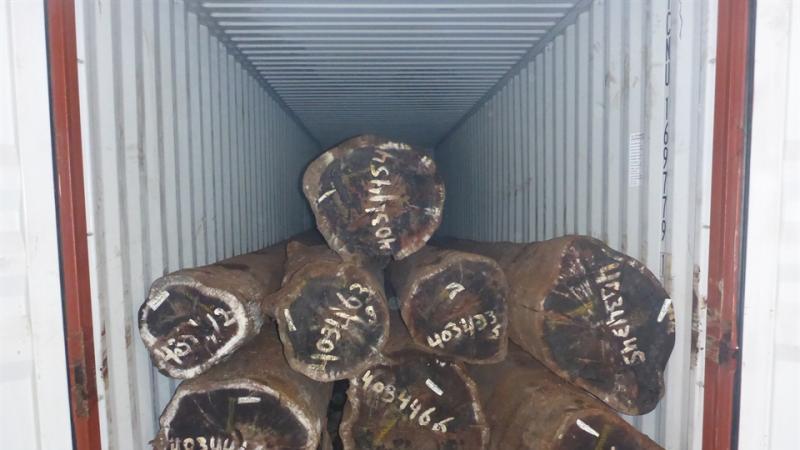 Douane vindt 1500 kilo drugs in boomstammen (Foto: Openbaar Ministerie)