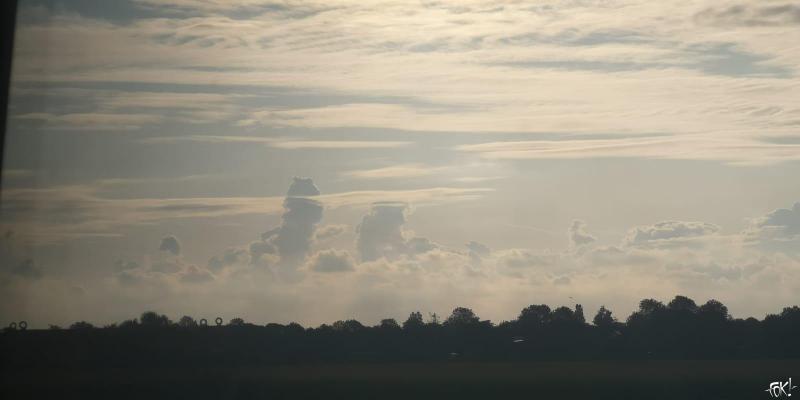 Cumules Erectus  (Foto: FOK!)