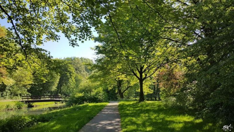 Een bos in Nederland  (Foto: FOK!)