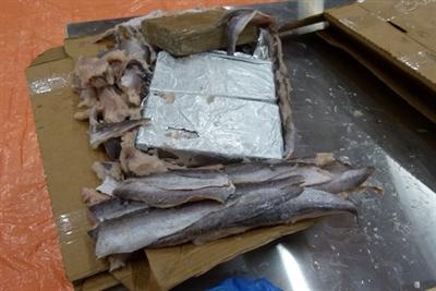 megavangst cocaïne in container met bevroren vis