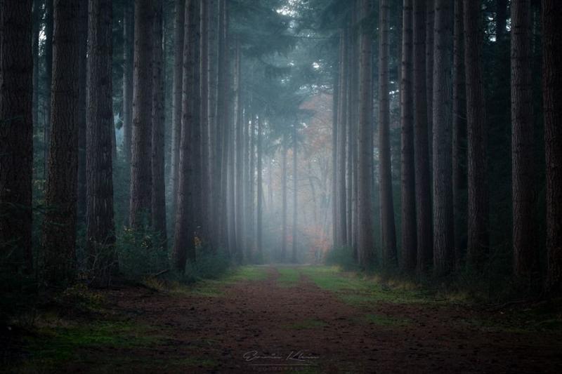 Het bos met mist (Foto: Erwin Klein)