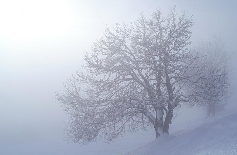 Scherpschutter legde de mist prachtig vast  (Foto: Scherpschutter)