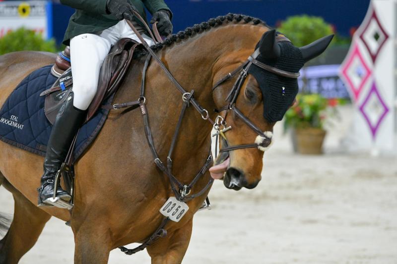 Dier&Recht pleit voor verbod op pijnlijke bitten in paardensport (Foto: Dier&Recht)