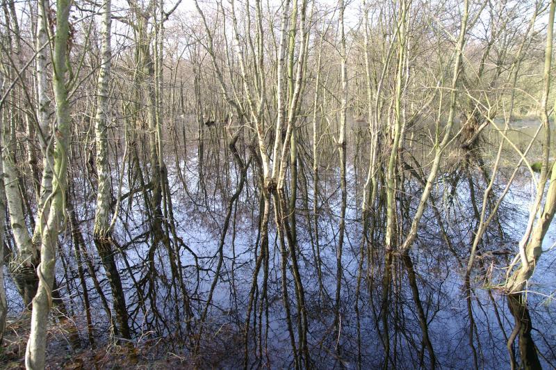 """Een foto van de """"swamps"""" van Haamstede. Met weerspiegeling (Foto: Scherpschutter)"""