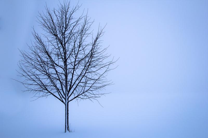 Afgelopen nacht kouder dan in hele winter (Stockfoto: Pixabay)