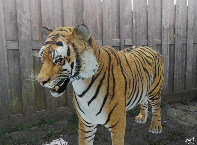 Zomaar een tijger in je tuin ... (Foto: FOK!)