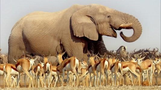 BBC Wildlife: Africa (foto: BBC)
