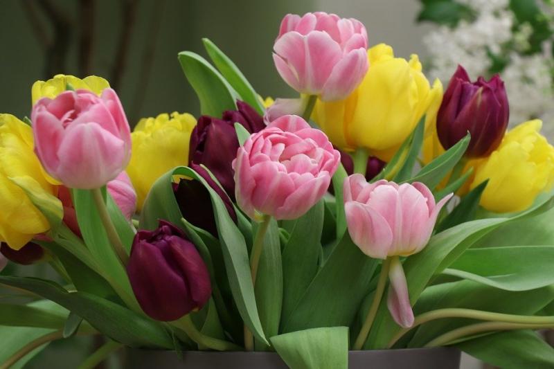 Bloemen voor moederdag (Foto: Pixabay)
