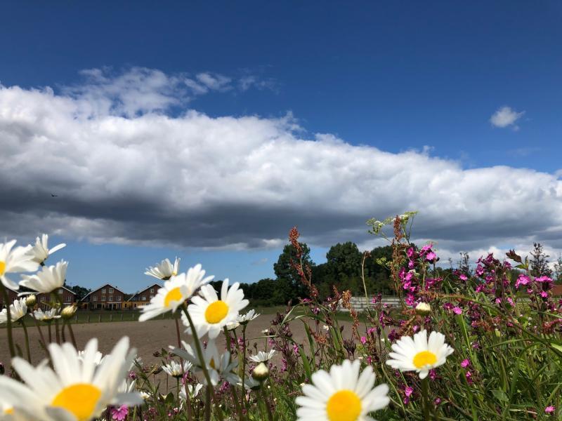 Mooie bloemen in Vijfhuizen (Foto: Charged)