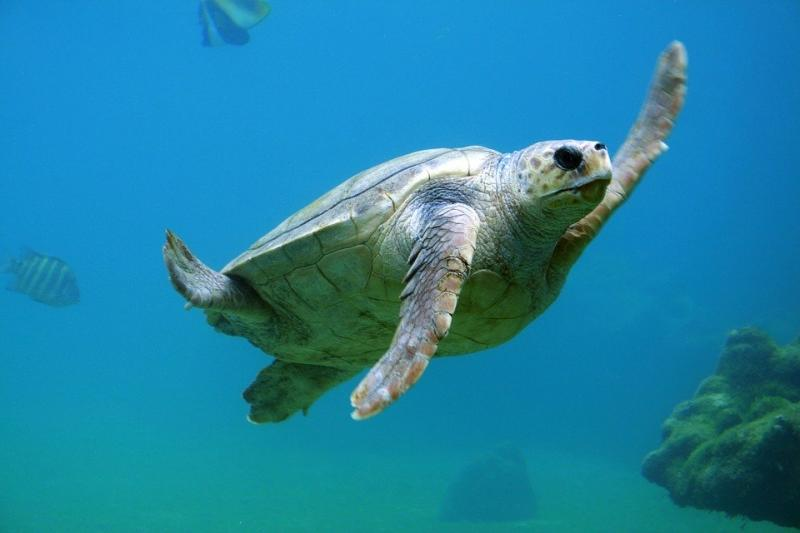 High five van een schildpad (Foto: Pixabay)
