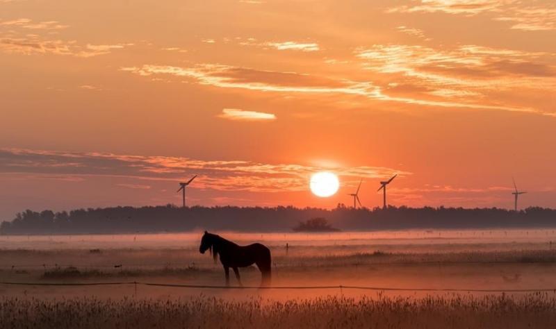 Een paard in de wei bij een mistige zonsopkomst (Foto: Kla)
