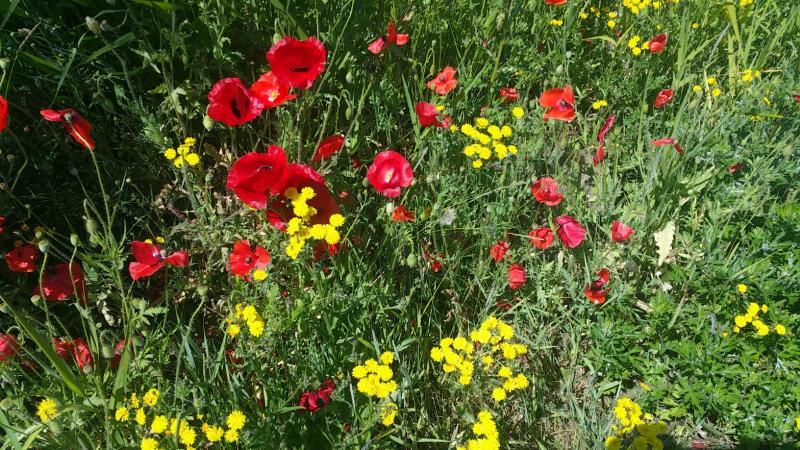 Mooie bloempjes (Foto: Interpretatie)