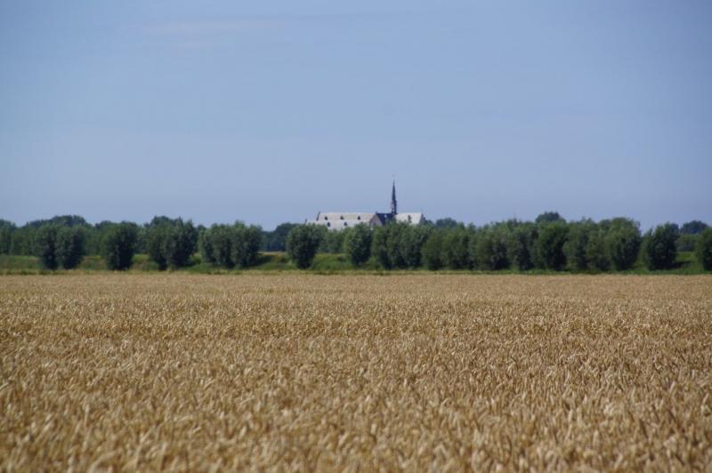 Graanveld (Foto: Scherpschutter)