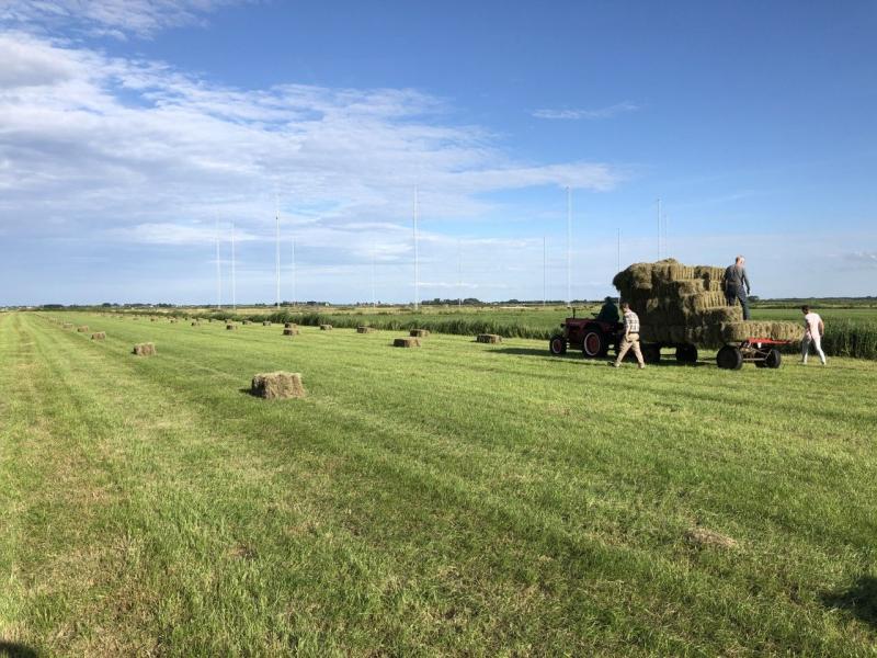 Hooien in de polder (Foto: KlapMongeaul)