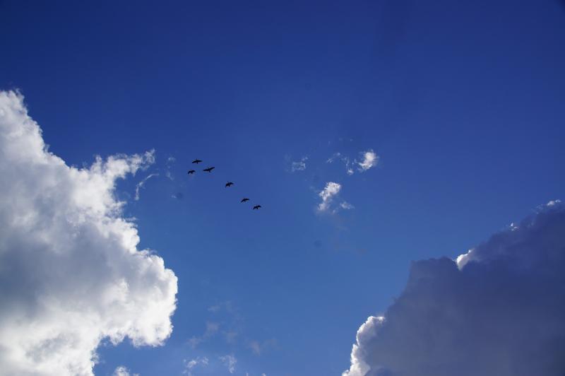 Scherpschutter zag ze vliegen...