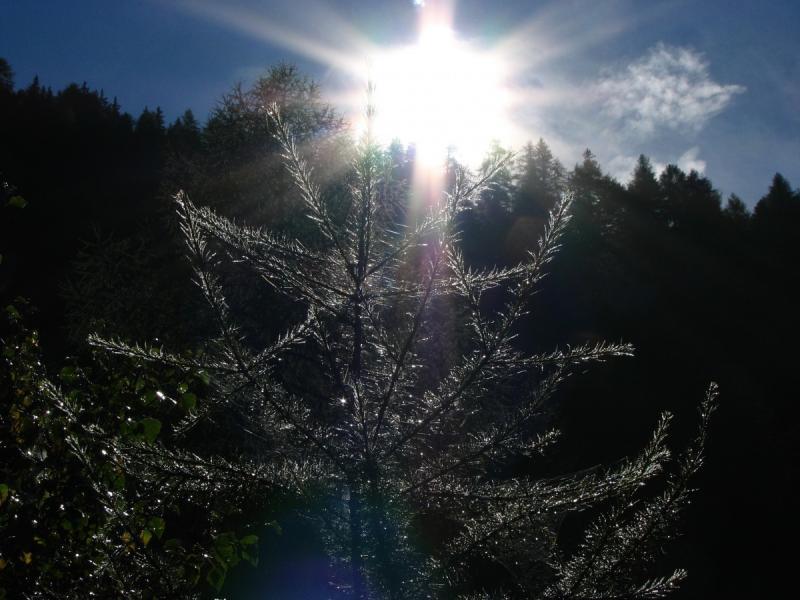 Kerst met een zonnetje (Foto: PXhere