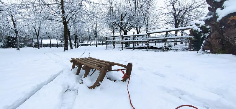 Sneeuw! Dus tijd om de slee te pakken. (Foto: Questular)