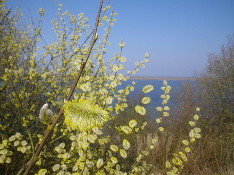 Begin van de lente (Foto: Scherpschutter)