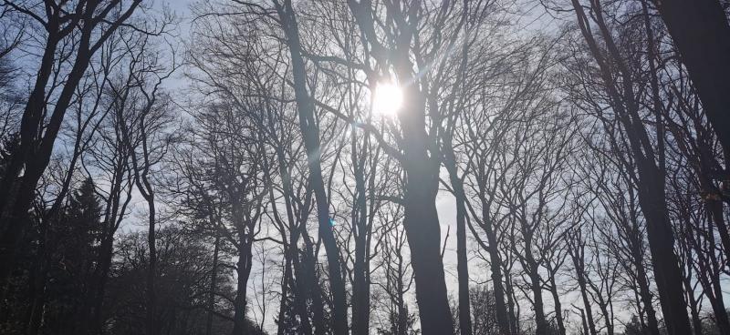 Zie de zon schijnt door de bomen (Foto: DJMO)