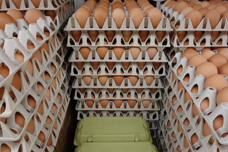 Het nutteloze feitje van de dag: heel veel eieren (WikiCommons/Arnold Bartels)